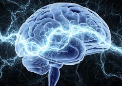 Blue Brain 2